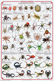 Arachnid Unit Study Insect Posters ...