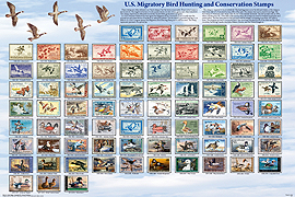 Duck Stamp Poster