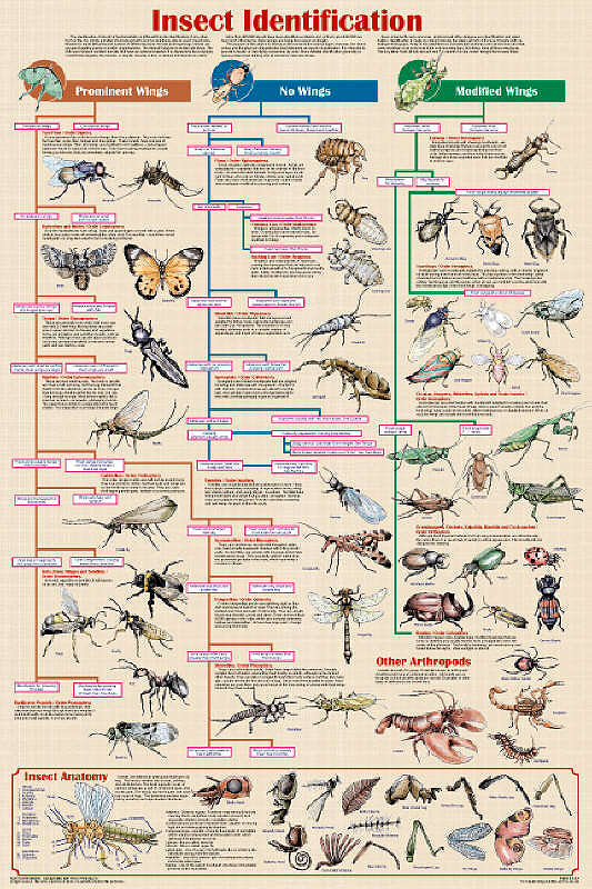 Insect Identification Chart helps to identify insects
