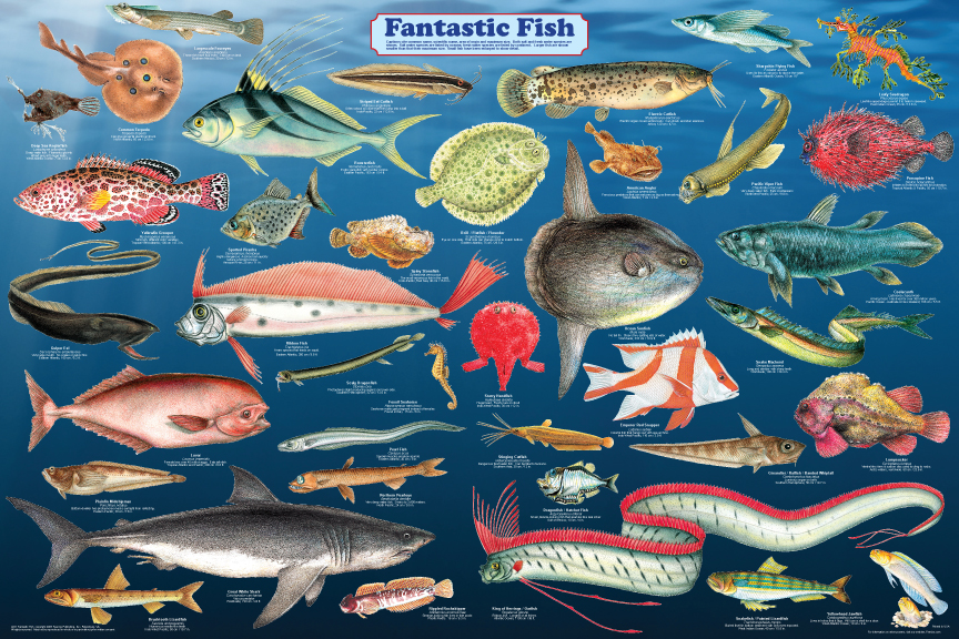 a231 fantastic fish print web