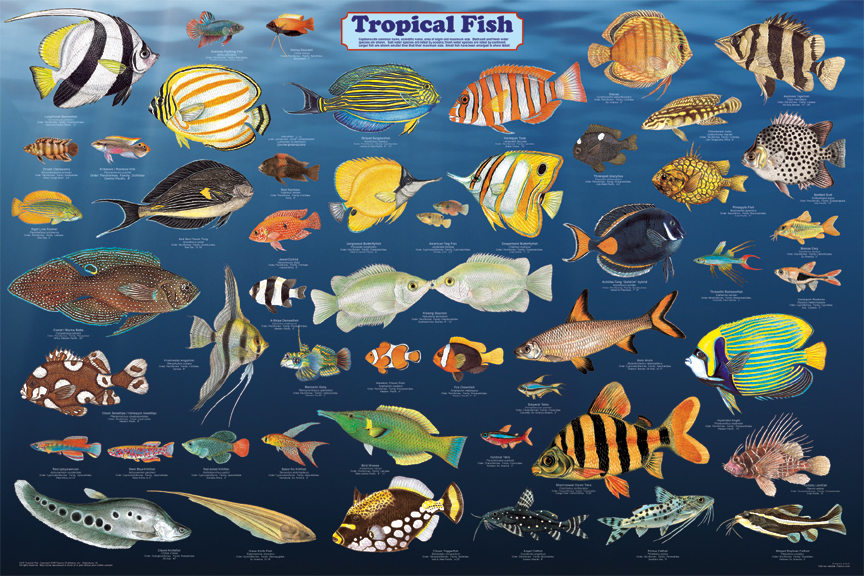 Advanced Search freshwater tropical fish photos