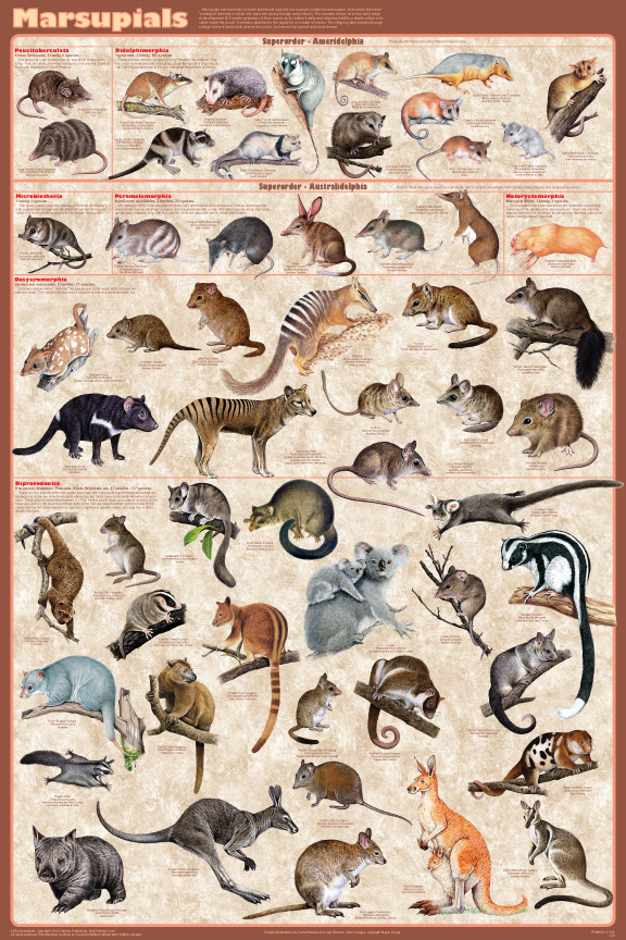 the evolution of mammals from the oceans