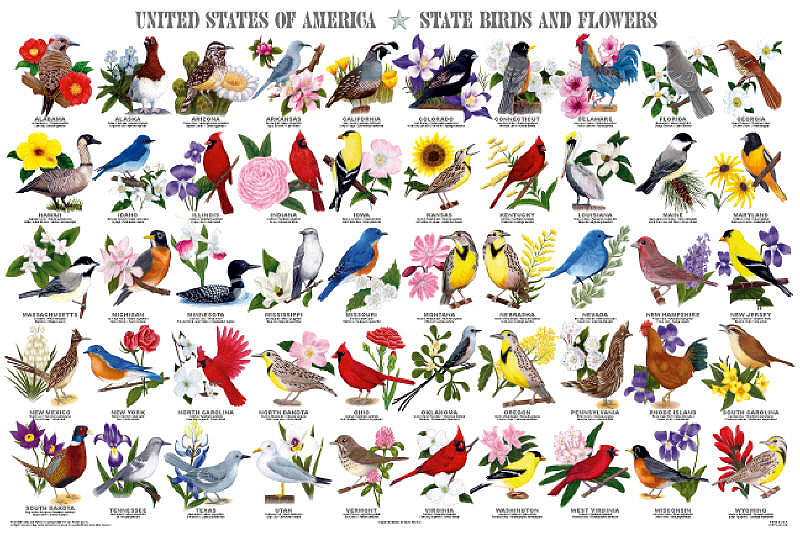 State Birds & Flowers Poster