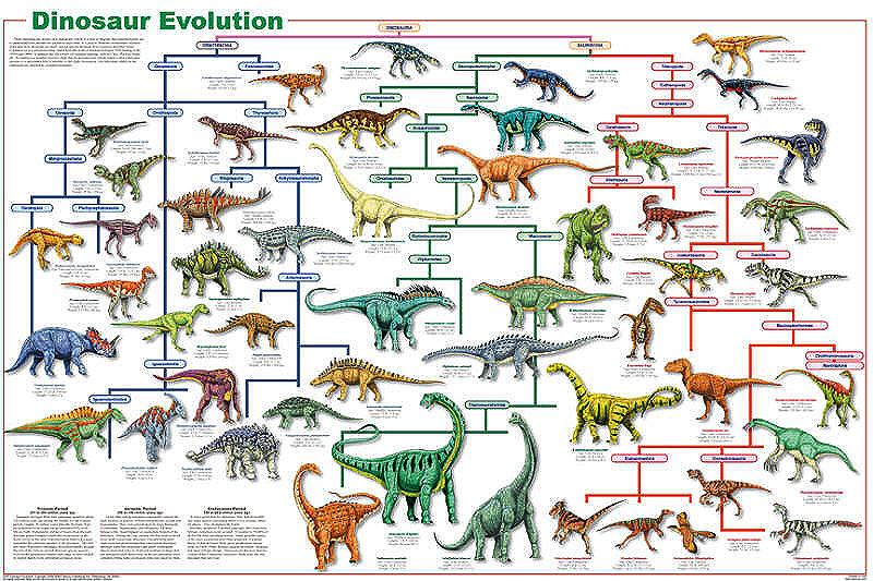 Dinosaur Evolution Poster on Space Exploration Timeline Worksheet