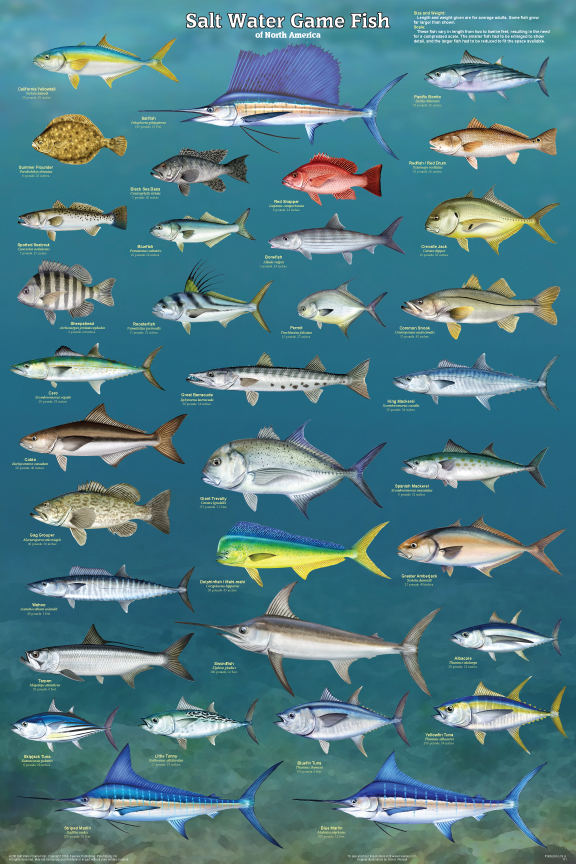 Salt water game fish poster for Game and fish