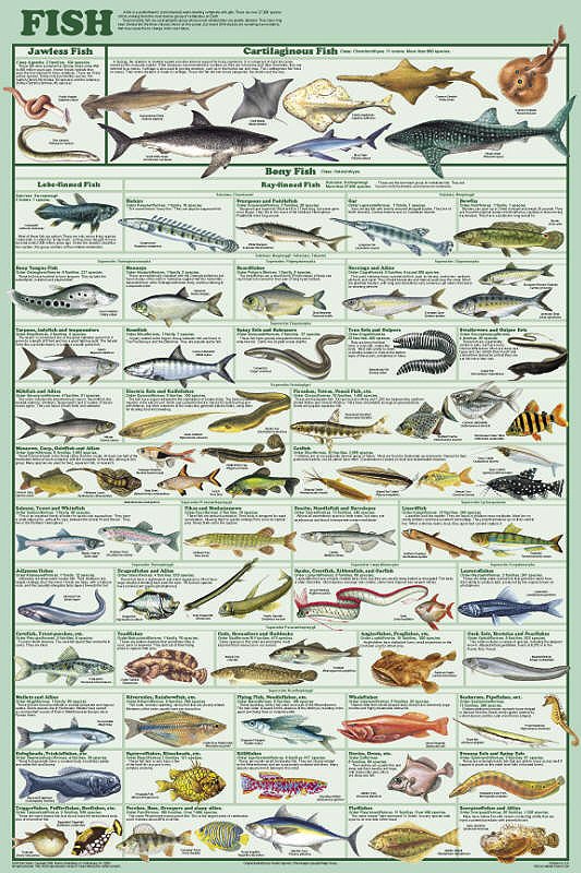 Fish Orders Poster By Feenixx Publishing