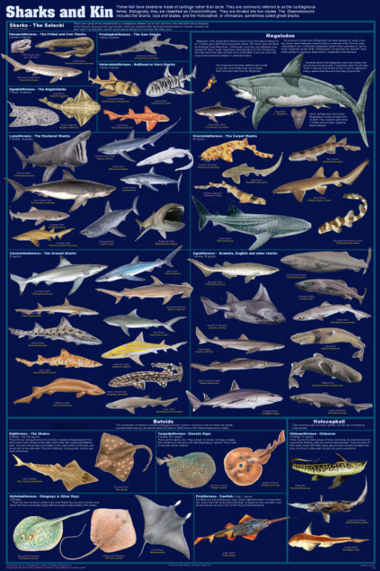 Feenixx publishing educational and hobby posters for How many fish are in the world